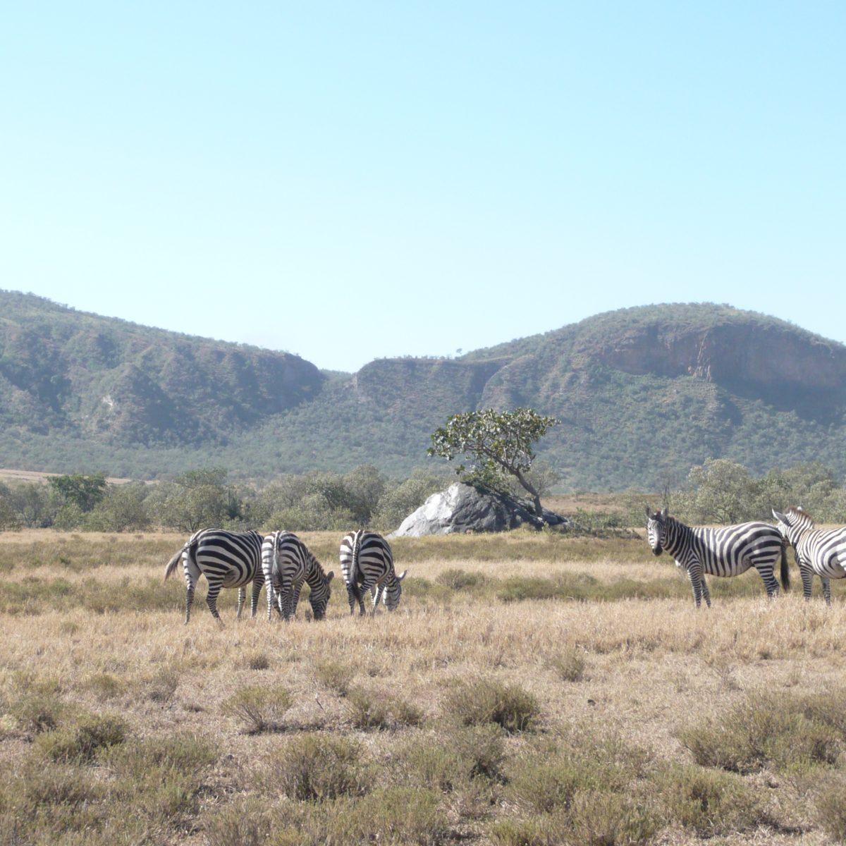 Zebras und vieles mehr bei der Wanderung im Hells Gate