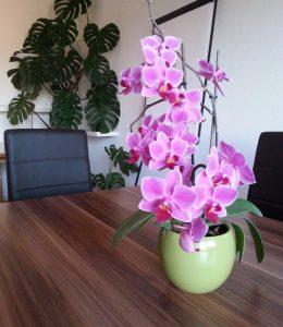 Nichts geht ohne die Orchideen